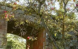 Belsay Hall, Castle and Gardens - Northumberland (winter) (c)English Heritage Trust, Derek St Romaine (7)