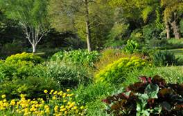 The Beth Chatto Garden (c)VisitEngland, VisitEssex VE12379