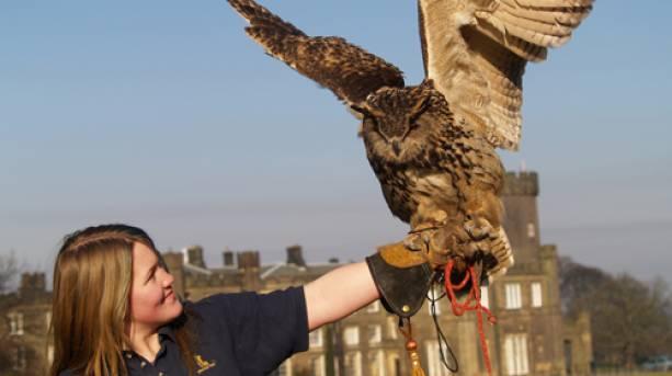 A lady holding an owl at Swinton Park in Harrogate