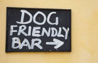 Dog Friendly Places