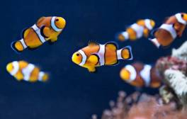 Surround yourself with tropical fish at SEA LIFE Brighton