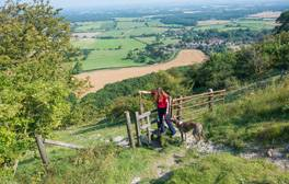 Explore the lush landscapes of South Downs National Park