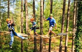 New Ways to see Sherwood Pines Forest